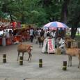 奈良公園 鹿がうようよ
