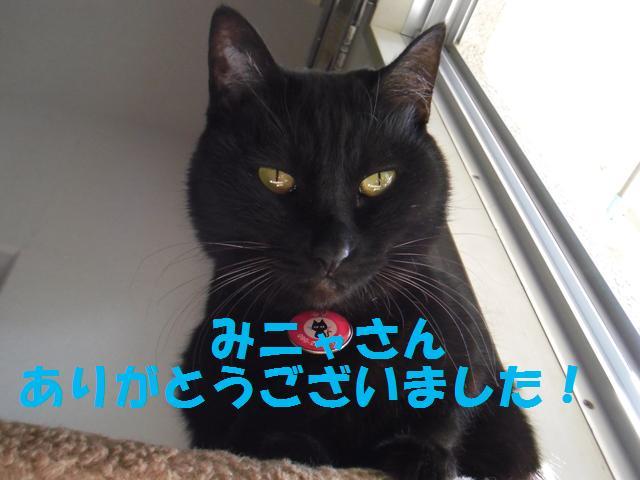 2011_02150014