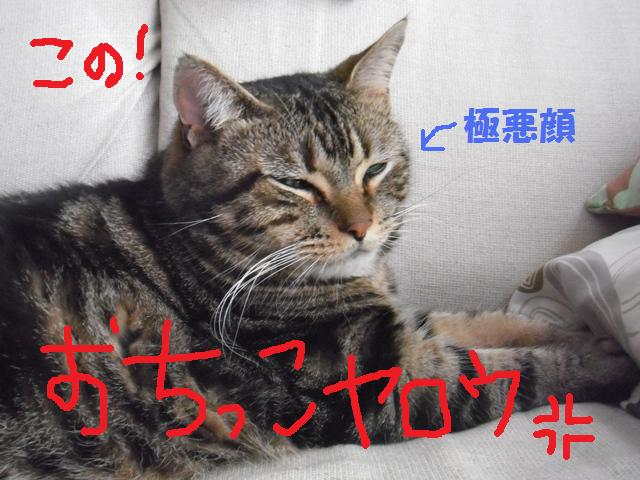 2011_06240017